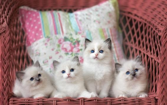 Wallpaper Four white kittens, basket