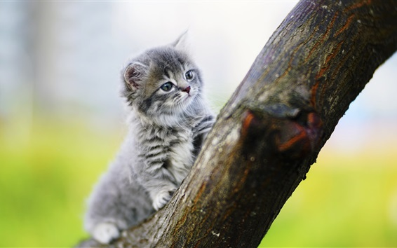 Wallpaper Furry kitten climbing tree
