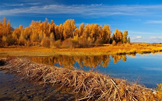 Обои Национальный парк Гранд Тетон, Вайоминг, США, деревья, озеро, осень