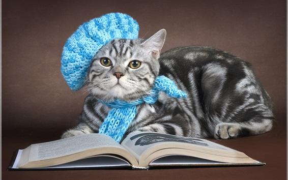 Fond d'écran Livre de lecture de chat gris, capuchon, écharpe