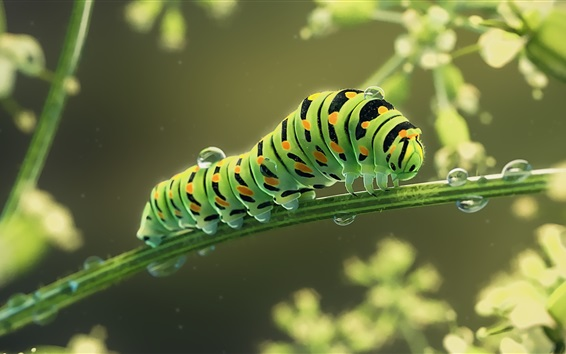 Wallpaper Green caterpillar, insect, water drops, art picture