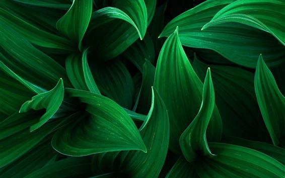 Wallpaper Green leaves macro photography