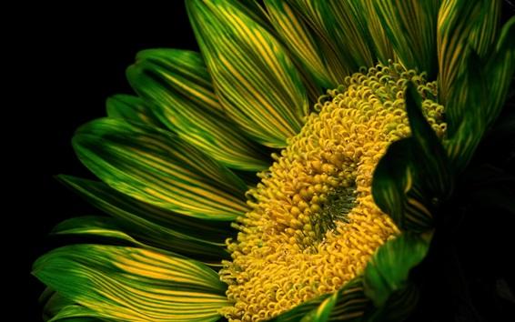 Обои Цветок зеленых лепестков, пестик