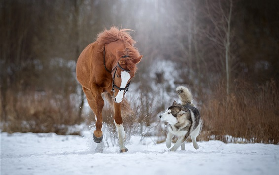 Wallpaper Horse and dog running in the snow