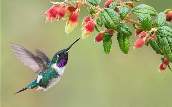 Wallpaper Hummingbird, bird, flight, flowers, water drops