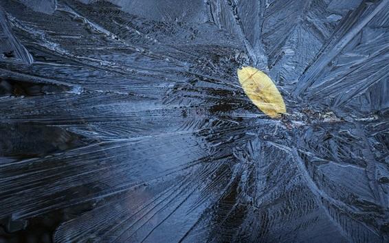 Wallpaper Ice, frozen, leaf