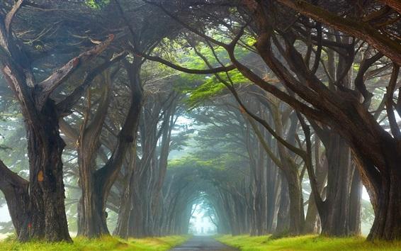 Papéis de Parede Irlanda, túnel de árvores, estrada, nevoeiro, grama, manhã