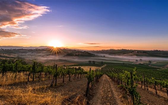 Wallpaper Italy, Tuscany, plantation, sun rays, morning, fog