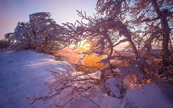Wallpaper Jura mountains, snow, winter, dawn, sunrise, trees, Switzerland