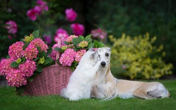 Wallpaper Kitten and dog are friends, hydrangea, basket