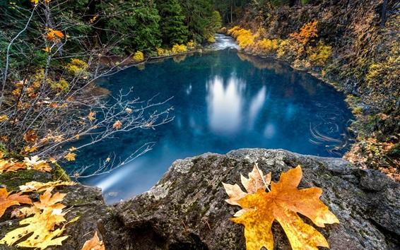 Papéis de Parede Lago, água azul, folha de bordo, outono