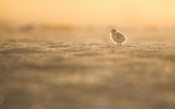 Papéis de Parede Pássaro pequeno, praia