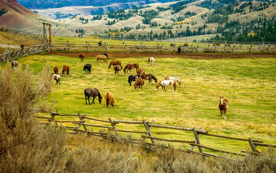 Papéis de Parede Muitos cavalos, grama, cerca