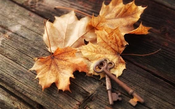 Wallpaper Maple leaves, keys
