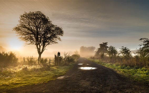 Wallpaper Morning, fog, road, trees, grass, glare