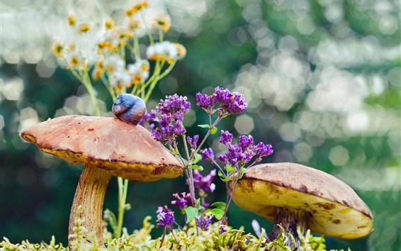 Wallpaper Mushrooms, moss, flowers, snail