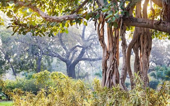 Wallpaper New Delhi, India, forest, trees, leaves