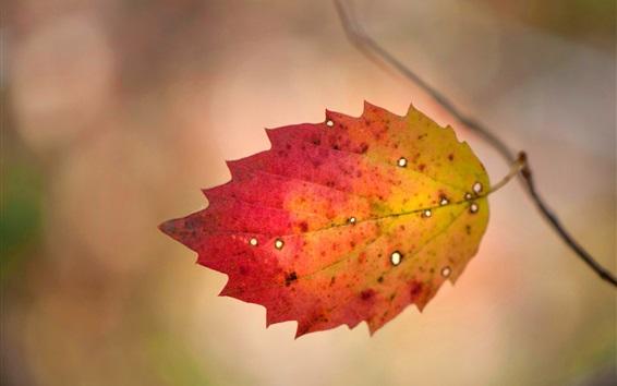 Wallpaper One leaf, twigs, autumn