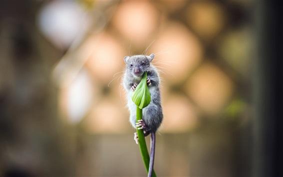 Wallpaper One mouse, green flower bud