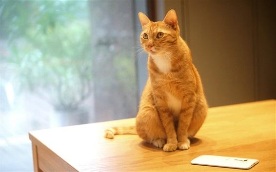 Fond d'écran Chat orange assis sur une table, téléphone