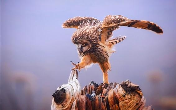 Fond d'écran Hibou, pattes, ailes