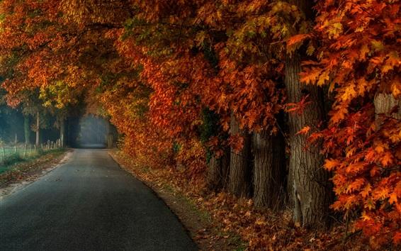 Papéis de Parede Parque, árvores, névoa, estrada, outono
