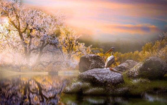 Fond d'écran Pélican, pierres, étang, arbres, matin