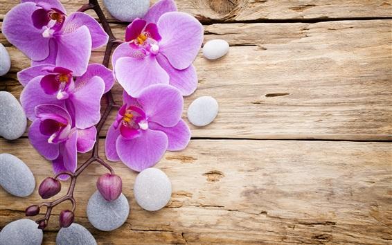 Wallpaper Phalaenopsis, purple flowers, stones