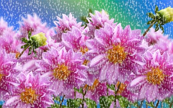 Обои Розовые цветы в дождь
