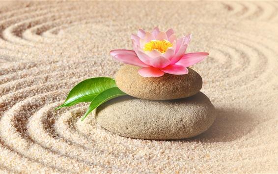 Papéis de Parede Lótus rosa, pedras, areias
