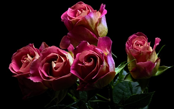 Wallpaper Pink roses, bouquet, flowers, black background