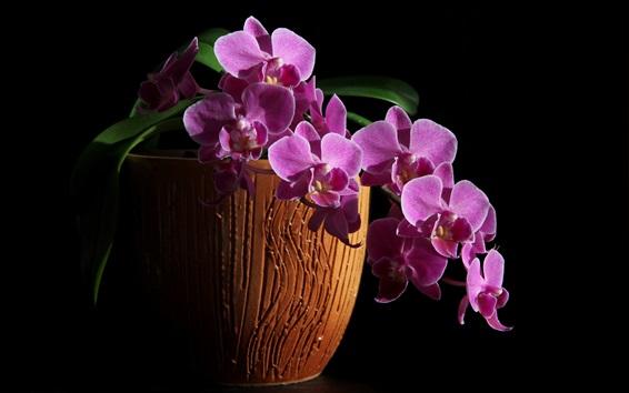 Wallpaper Purple phalaenopsis flower macro photography