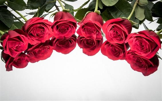 Обои Красные розы, отражение, белый фон