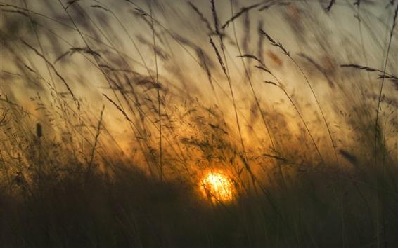 Обои Трости, солнце, утро