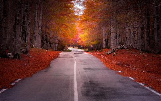 Fondos de pantalla Camino, árboles, hojas rojas, otoño, anochecer
