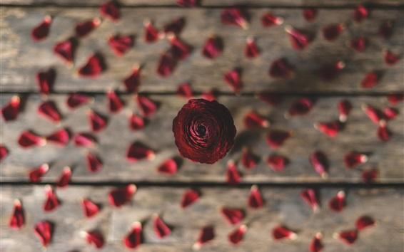 Wallpaper Rose, petals, wood board background