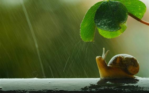 Wallpaper Snail, umbrella, green leaf, rain