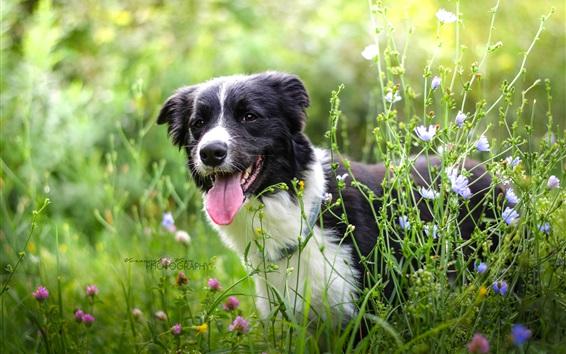 Обои Лето, собака, трава, полевые цветы