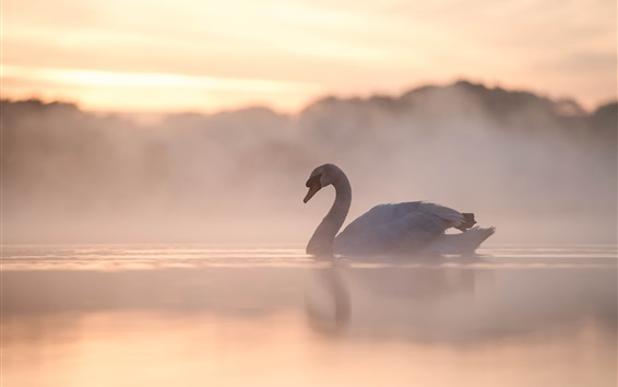 Wallpaper Swan, lake, fog, morning