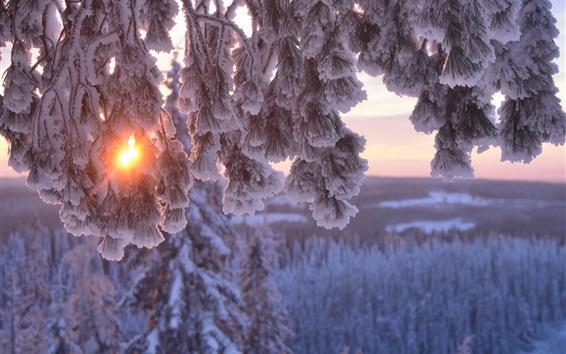 Обои Толстый снег, солнечные лучи, ветки, зима