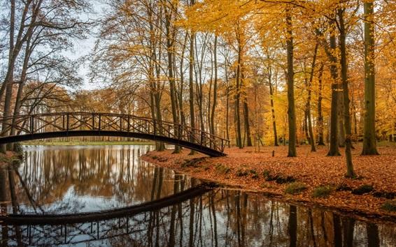 Wallpaper Trees, bridge, river, park, autumn