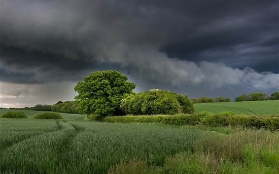 Wallpaper Trees, fields, grass, clouds, nature