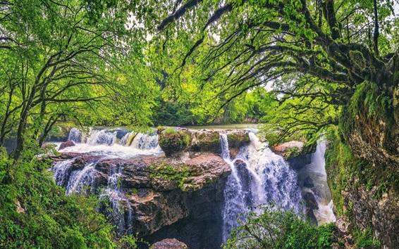 Fond d'écran Arbres, vert, cascades, eau