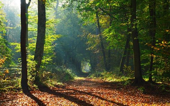 배경 화면 나무, 길, 태양 광선, 가을