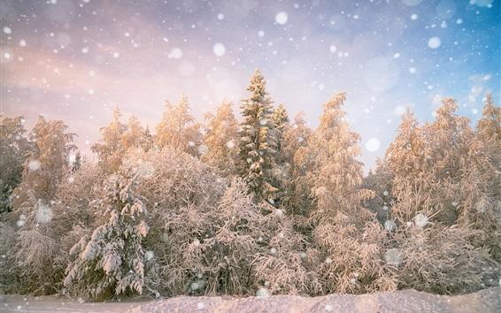 Fond d'écran Arbres, neigeux, hiver