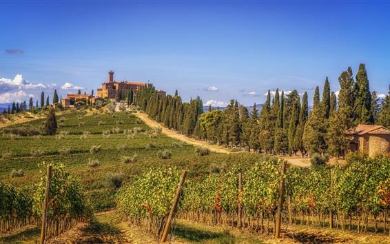 Обои Тоскана, виноградник, зелень, холмы, деревья, Италия