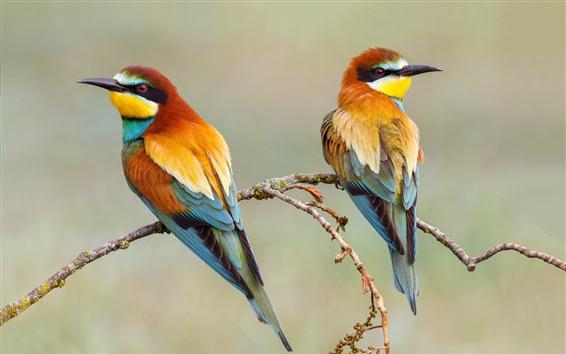 Papéis de Parede Dois pássaros, europeu, bee-eater