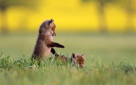 Обои Две лисы, детеныши, игривые
