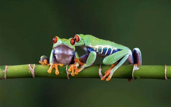 배경 화면 두 개구리, 대나무