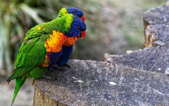 Wallpaper Two parrots, stump